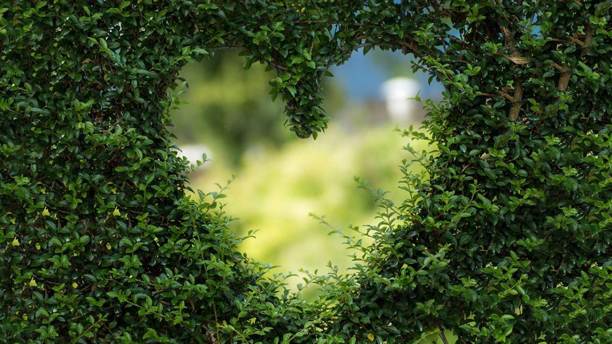 L'epidemia dell'amore - GIovanni Maccioni